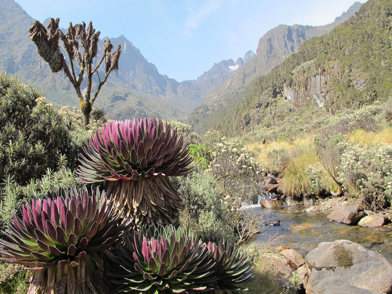 Ruwenzori: on the Central Circuit Trail, Davide Orlandi