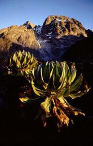 Il Monte Kenya parete nord, Manuel Lugli