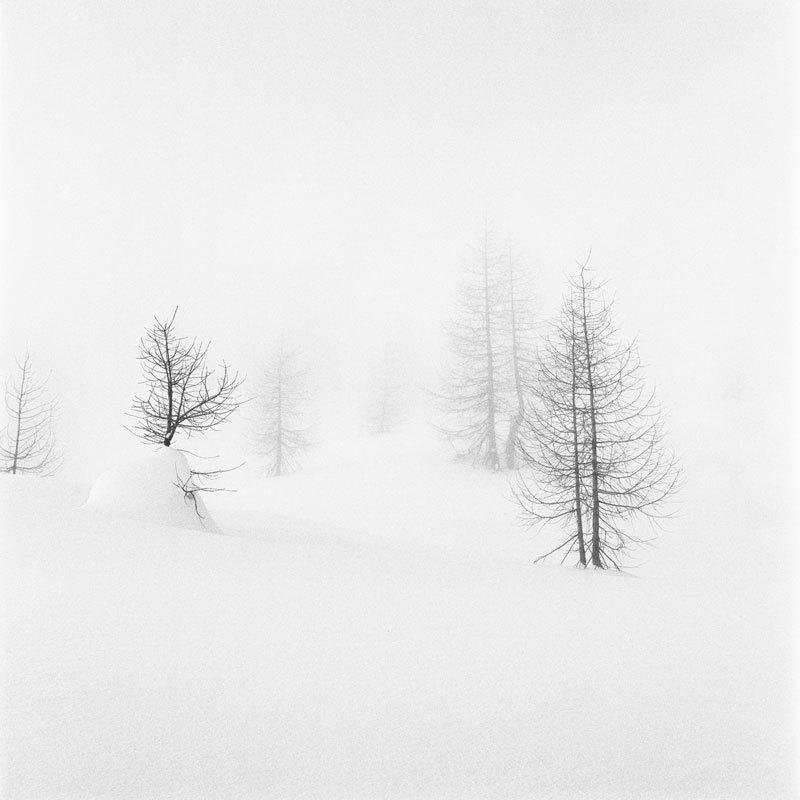 Neve, Alberto Bregani