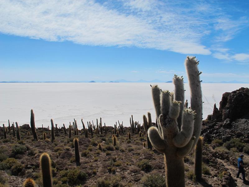 Isla del Pescado. Salar de Uyuni, David Orlandi