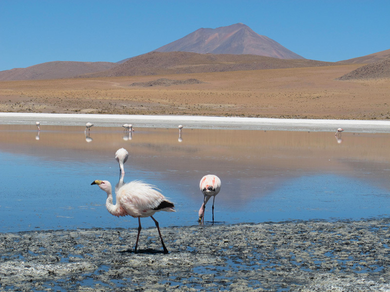 Lagune ad alta quota e fenicotteri rosa. Bolivia sudoccidentale, David Orlandi