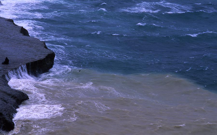 Sea lions, Penisola Valdez, Nicholas Hobley