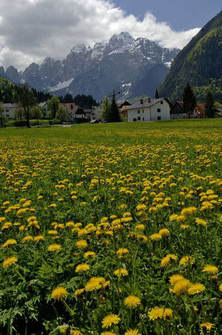 Valbruna e Jof Fuart versante Nord, Mario Verin