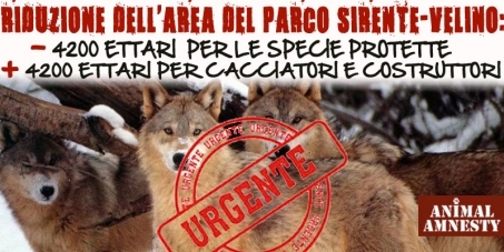 The petition launched by Animal Amnesty Italia to save the bears and wolves in Abruzzo, Italy, Animal Amnesty Italia