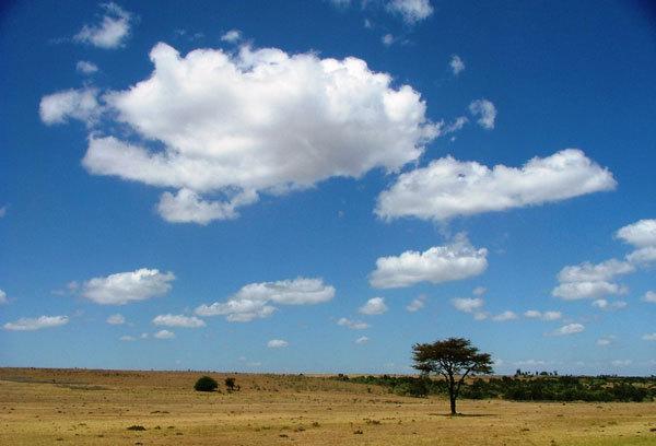 Masai Mara National Park, Milena Marsoni