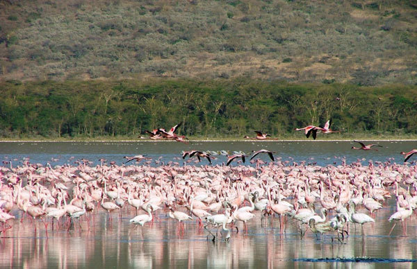 Lake Nakuru National Park, Milena Marsoni