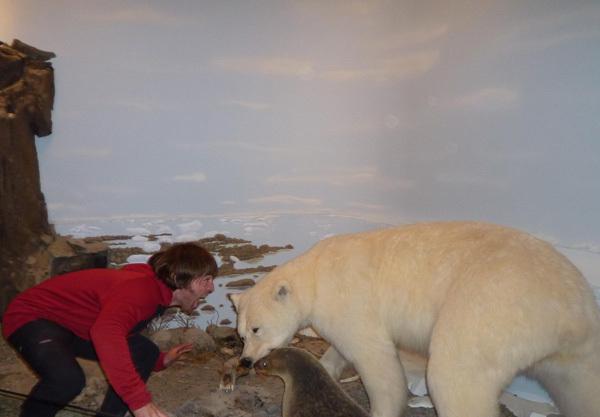 Incontri ravvicinati sull'Isola di Baffin., arch. Favresse