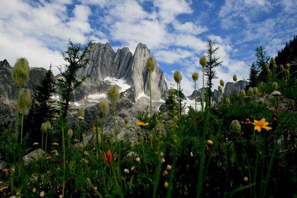 Una valle selvaggia..., M. F. Riegler