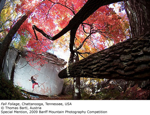 Special Mention: Fall Foliage, Thomas Bartl