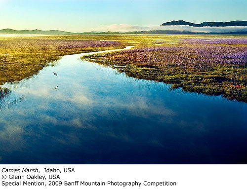 Special Mention: Camas Marsh, Glenn Oakley