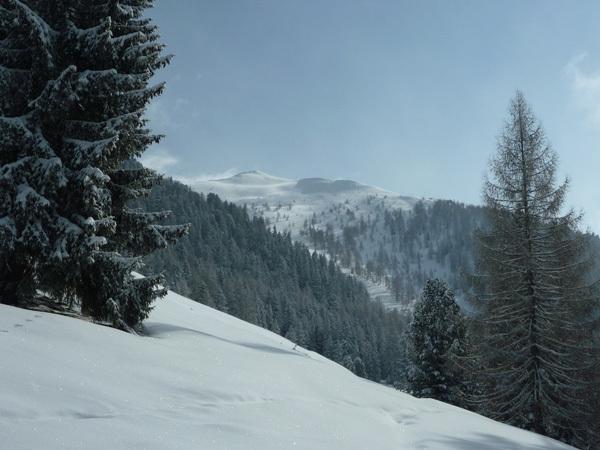 Cima Nassere - La cima vista dai pascoli di Malga Nassere, Alessandro Beber