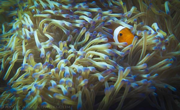 Coralli nel mare di Tioman Island, Malasia, David Kaszlikowski