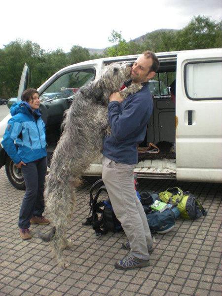 Brian e il cane da cervi, Andrea Giorda