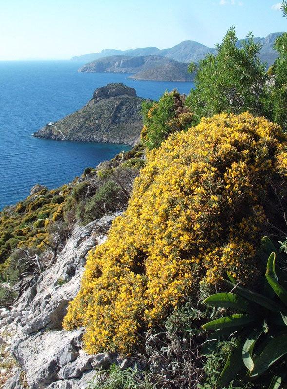 Primavera a Kalymnos, archivio N. Noè