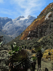 Ruwenzori: the Central Circuit Trail