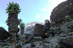Quarto giorno. Il versante Sud Ovest del Mt Kibo