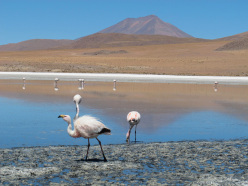 Lagune ad alta quota e fenicotteri rosa. Bolivia sudoccidentale