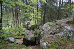 Boulder in Valle di Daone