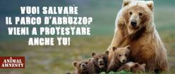 The petition launched by Animal Amnesty Italia to save the bears and wolves in Abruzzo, Italy