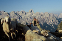 The shepherd Angelo Moltrer, with the Pale di San Martino (Dolomites) in the background.