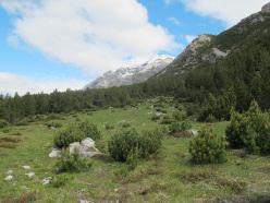 La bellissima radura, in salita verso il Monte Solena, Valdidentro,  Alta Valtellina