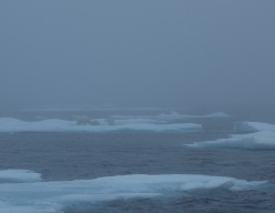 Arrampicata a Gibbs Fjord, per Nicolas Favresse, Olivier Favresse, Ben Ditto e Sean Villanueva