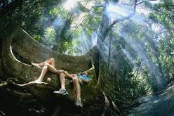 Foresta pluviale tropicale a Queensland, Australia