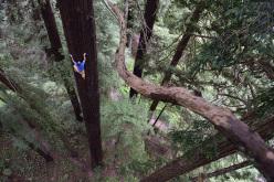 Chris Sharma sale un gigante albero di sequoia ad Eureka, USA, il 20 maggio 2015.