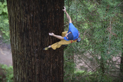 Chris Sharma climbing a Redwood tree in Eureka, CA, USA on 20 May 2015