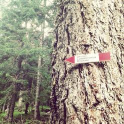 Verso il Rifugio Lambertenghi – Romanin al Passo Volaia, Alpi Carniche