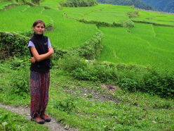 Trekking in Nepal: rice fields at Gandruk, Annapurna