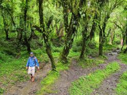 Trekking in Nepal: in the Annapurna Ghorepani forest