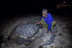 Uncle Sam and a giant visiting turtle, Tioman Island, Malaysia