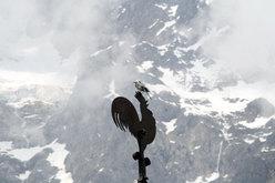 Uccellino delle Jorasses