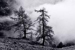 Vallone della Roussa-Val Chisone (TO)