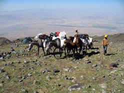 I cavalli portano il materiale più pesante