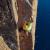 Steve Bradshaw sulla nuova via Improbability Drive, The Impossible Wall, Groenlandia.