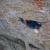 Come animali nella bolla dei temporali, Corno Stella. 7c, 6c obbl., 450m, Christian Gaab, Uli Strunz, Benno Wagner, Toni Lamprecht, Paolo Dalmasso, 08/2012.