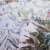 Durante la Zemu Exploratory Expedition del 2014. Con Alberto Peruffo, Anindya Mukherjee, Cesar Rosales Chinchay, Francesco Canale, Davide Ferro, Andrea Tonin, Enrico Ferri.