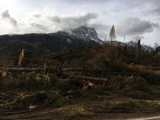 Coffee Break #25 / San Nicolò e la distesa degli alberi caduti
