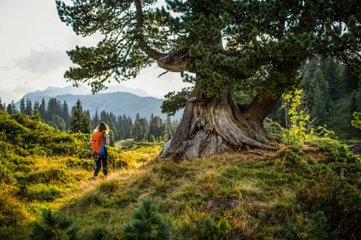 La Svizzera a piedi per un'estate indimenticabile