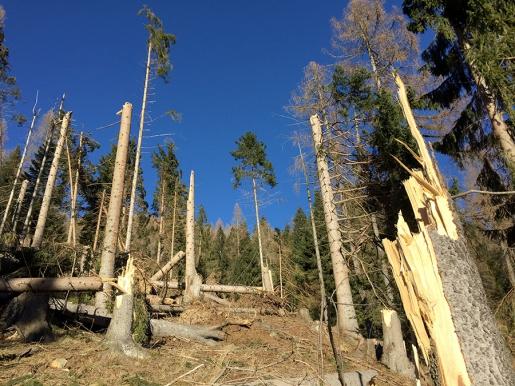 L'uomo, la natura, il panico e l'agire collettivo