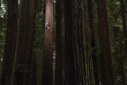 Chris Sharma climbs Jumbo Wood on giant Redwood tree