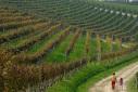Langhe-Roero e Monferrato, camminate facili per bambini in Piemonte