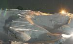 Da Pila alla Patrouille: tutto lo scialpinismo in gara