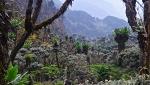 Bukurungu Trail: un nuovo trekking nel Rwenzori in Uganda