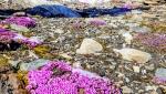 Valorizzazione della montagna: 4 borse di Studio Outback '97 per l'Università di Bergamo