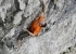 Steve McClure making the first ascent of Rainman at Malham Cove, the first 9b sports climb in Great Britain