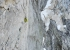 Pizzo Badile: Marcel Schenk climbing pitch 10 of Free Nardella